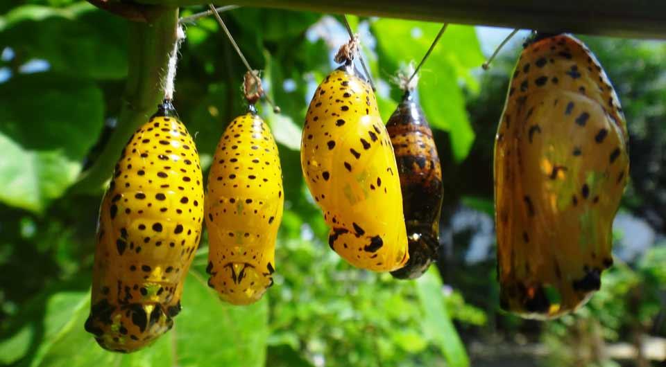 Butterfly Farm, Aruba, Caribe