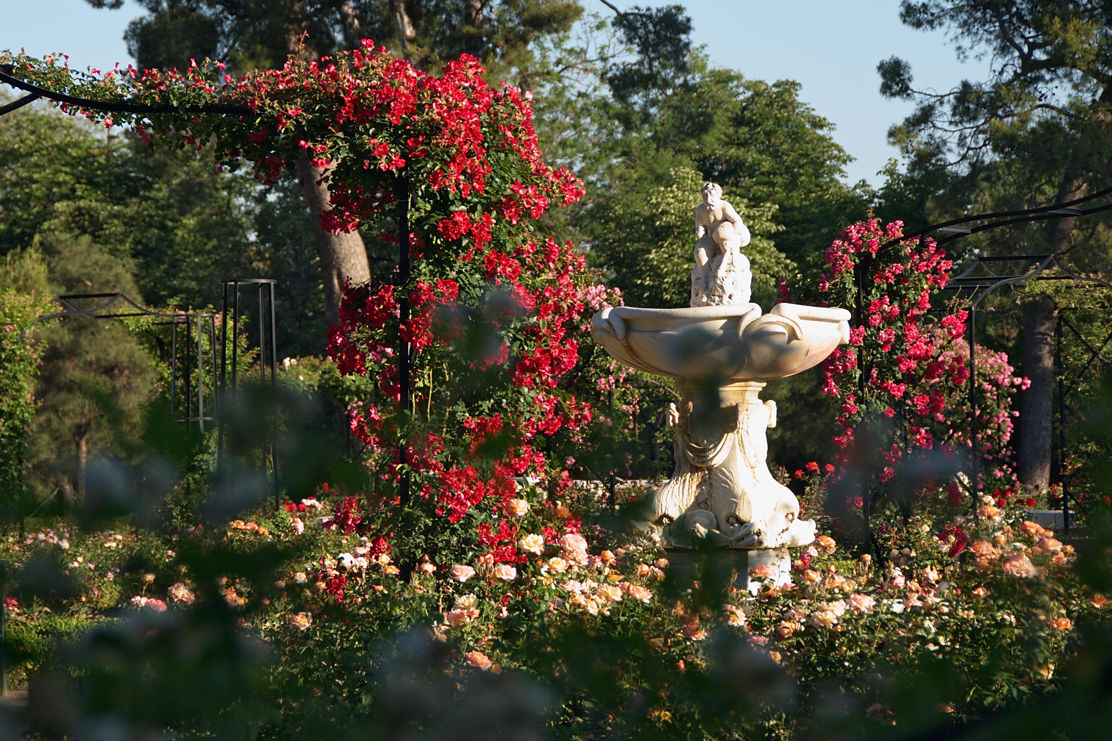 La Rosaleda, no Parque do Retiro, Madri, Espanha