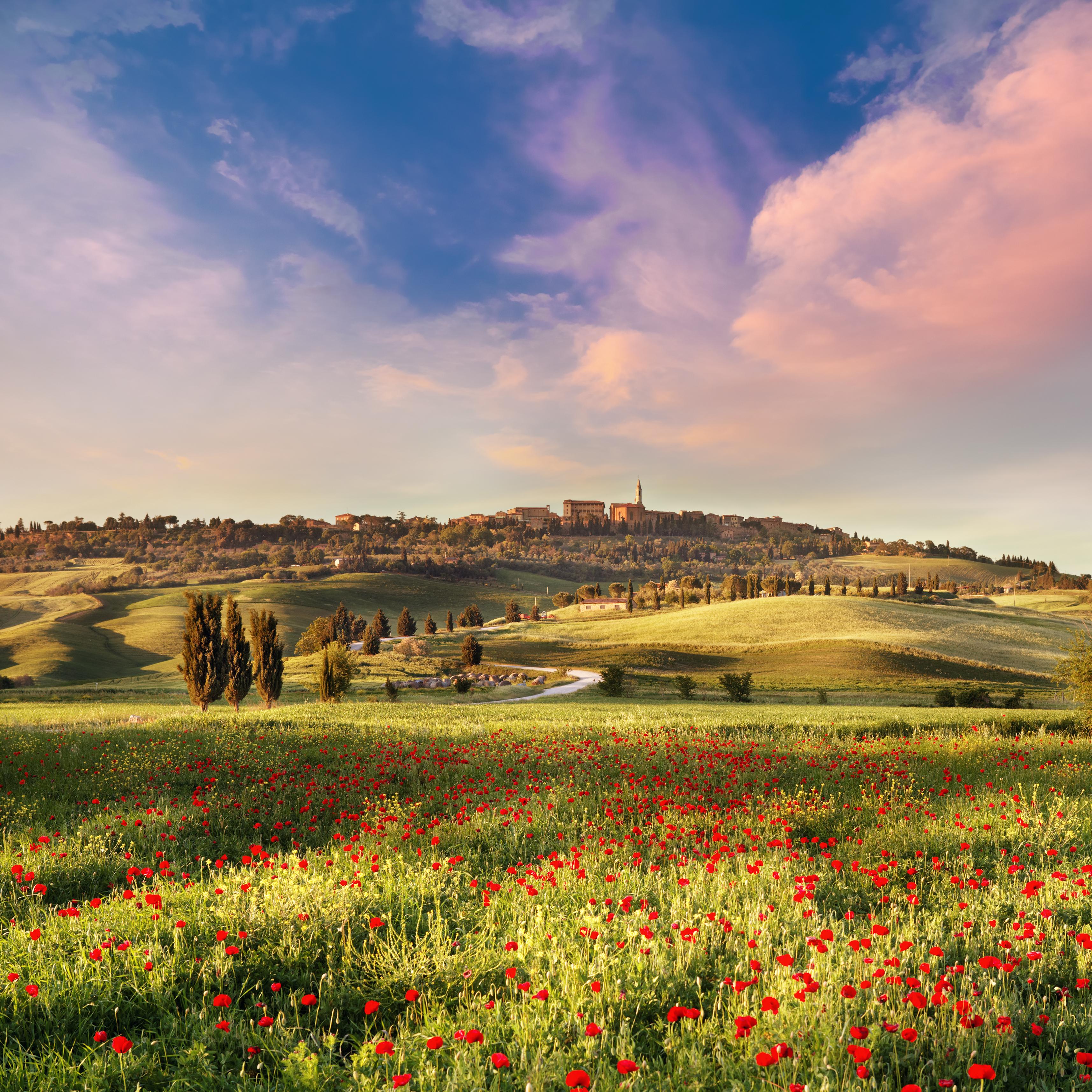 Campo de papoula na Toscana, ao por do sol