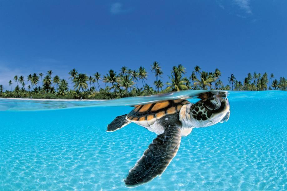 Marutea, na Polinésia Francesa: a luta das tartarugas para sobreviver levou David Doubilet a mundos exóticos