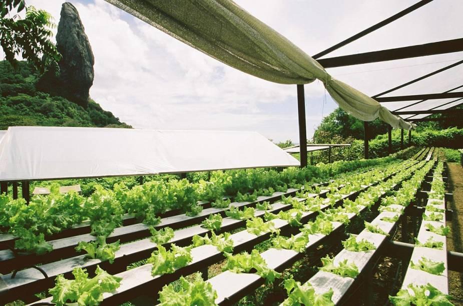 A pousada mantém uma horta hidropônica para consumo do próprio restaurante