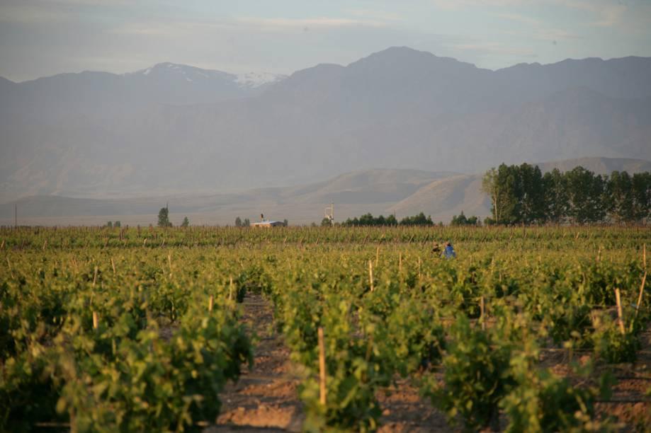 Mendoza produz quase 80% da produção de vinho da Argentina. A colheita da uva é celebrada com música e desfiles na Festa Nacional da Vindima, em março