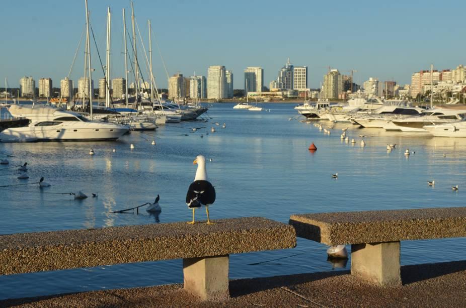 Os iates aportados na Playa Mansa, no balneário uruguaio de Punta del Este
