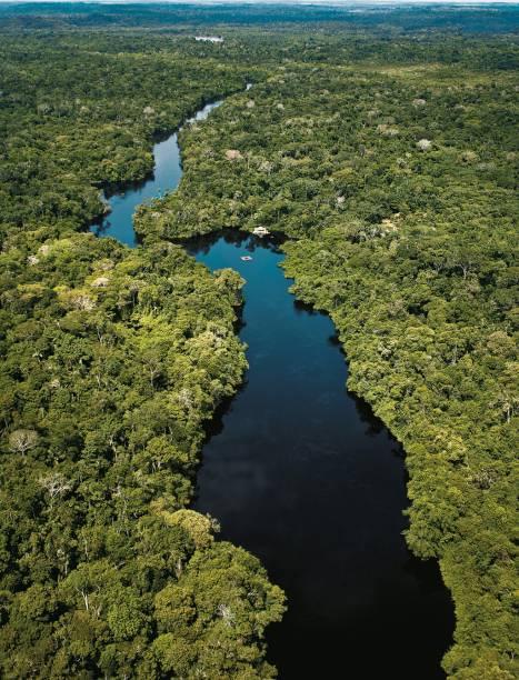 Com mais de 7 milhões de quilômetros quadrados, a Amazônia se estende por territórios do Brasil, Venezuela, Suriname, Colômbia, Bolívia, Equador, Peru, Guiana e Guiana Francesa. A maior floresta tropical do mundo reúne uma em cada dez espécies de animais da Terra