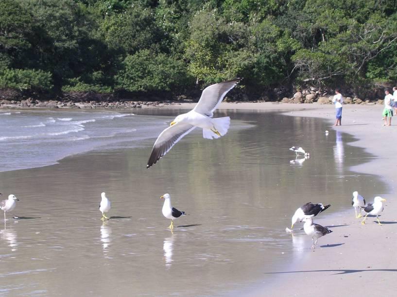 Gaivotas na Praia de Bombas, procurada por surfistas devido ao mar agitado e pelas famílias que se hospedam em pousadas da orla