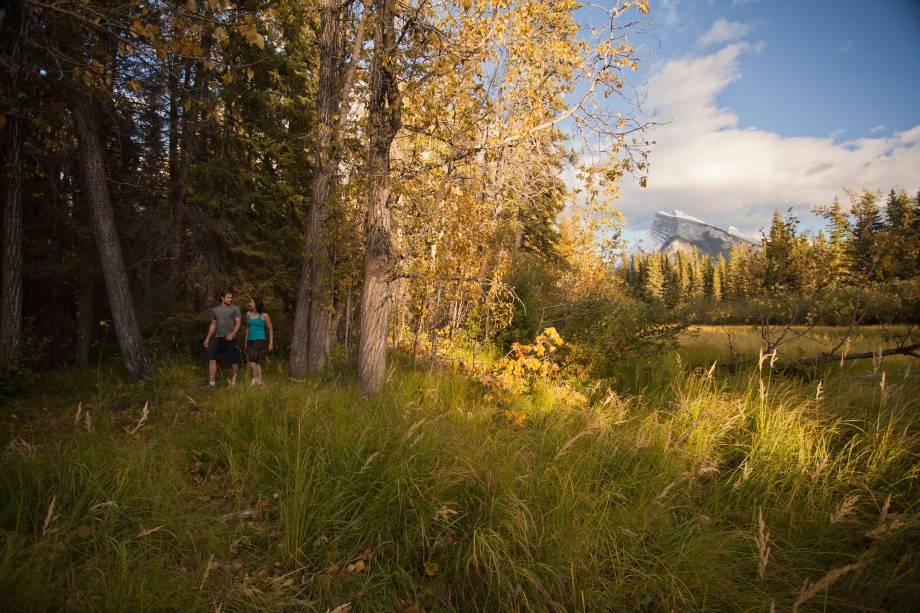 <strong>Trilha Fenland</strong>        Uma trilha de nível fácil que passa por um dossel de píceas (uma espécie de pinheiro) bastante antigas. São apenas 2,1km de trilha cheia de placas explicando cada detalhe. Ela demonstra bastante sobre o ecossistema local e é um bom jeito de começar a explorar a área e a se encantar com Banff