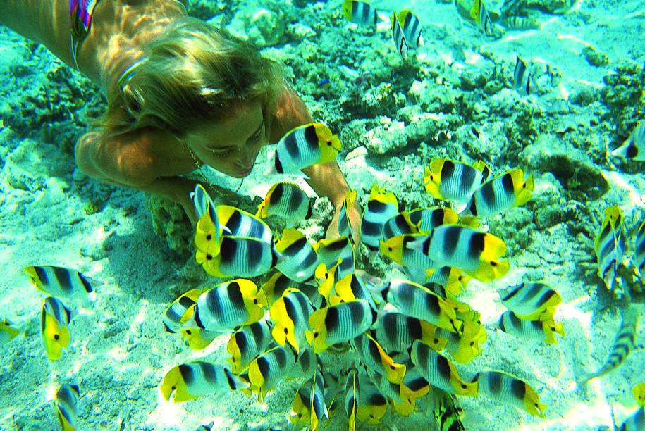 Peixes borboleta em mergulho próximo ao Tahiti