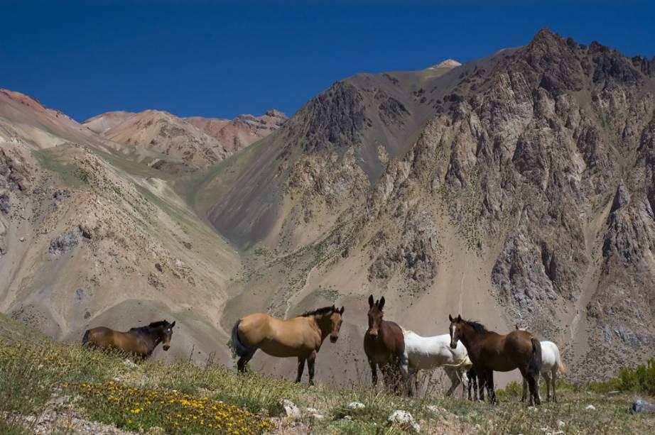 """É possível percorrer os arredores de Mendoza, que fica aos pés da Cordilheira dos Andes, em cavalgadas como os típicos """"gaúchos"""""""