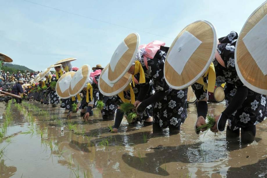O <strong>Mibu no Hana Taue</strong> é um ritual de replantio do arroz em Hiroshima, no <strong>Japão</strong>, para que a colheita seja abundante. No primeiro domingo de junho, os camponeses se reúnem e cantam acompanhados de tambores, flautas e gongos