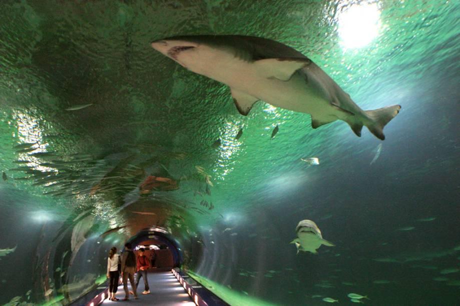 O impressionante aquário L'Oceanogràfic, na Cidade das Artes e das Ciências de Valência, é um dos maiores da Europa