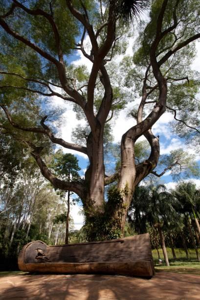 Brumadinho, rústico vilarejo no interior de Minas Gerais, recebe mais de 100 mil visitantes por ano para conhecer o Instituto Inhotim