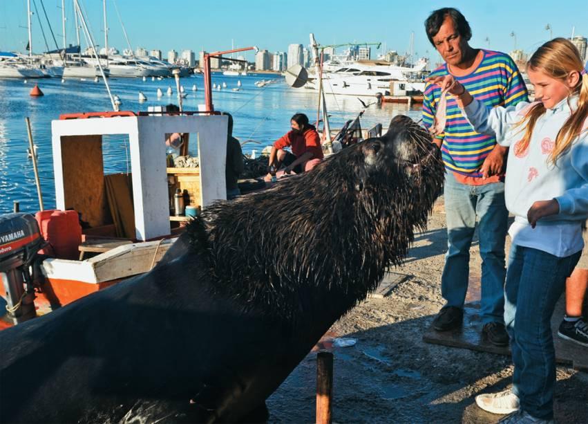 Um educado leão-marinho no porto