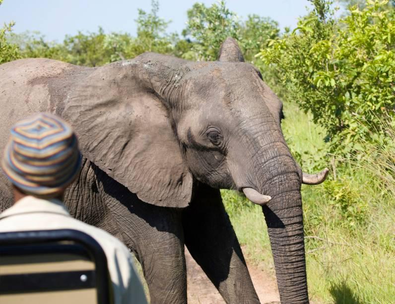 Com 20 milhões de quilômetros quadrados e milhares de animais, o Kruger Park é um dos melhores lugares do mundo para fazer safáris