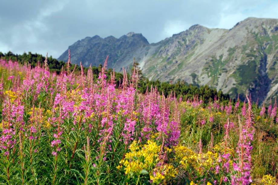 Donos de uma paisagem deslumbrante, os Montes Tatras são considerados como um parque nacional. Muitas de suas trilhas são percorridas por visitantes em busca de aventura