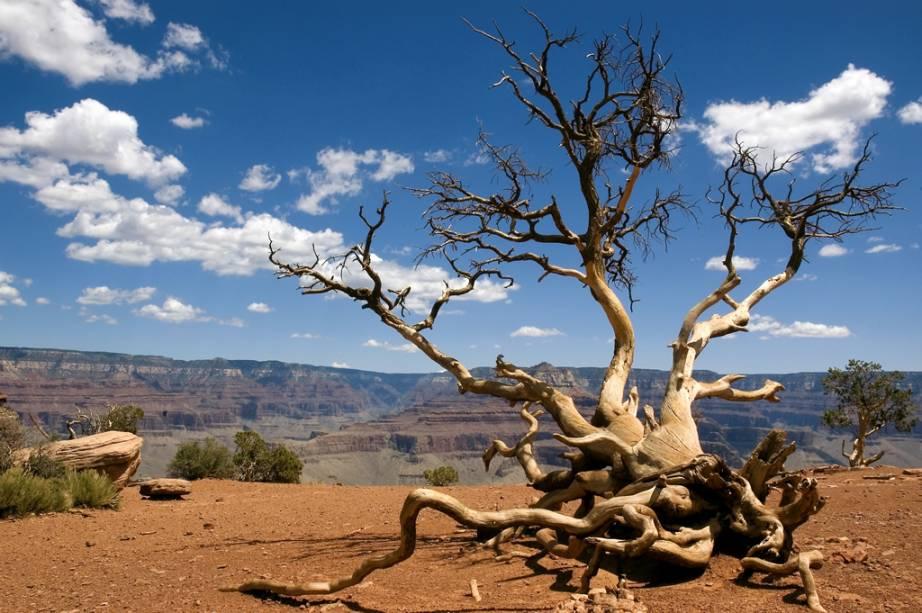 Os geógrafos estimam que o Grand Canyon começou a ser esculpido de 2,6 milhões a 10 milhões de anos atrás. Para cruzá-lo, turistas optam pelo trekking ou pela travessia de carro, feita a partir da Navajo Bridge