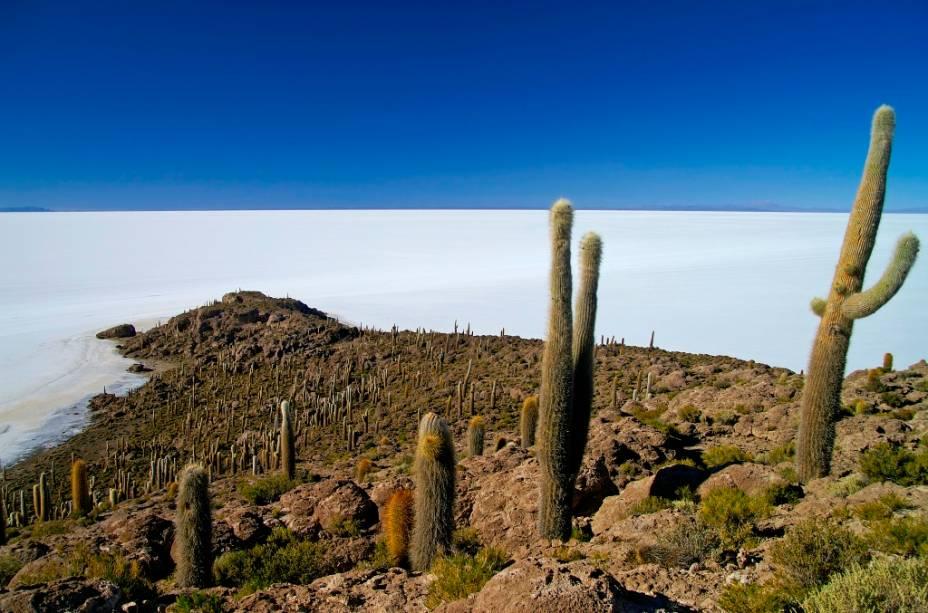 A Isla del Pescado, ou de los Pescadores, é uma elevação sobre o Salar de Uyuni. Uma de suas principais características são os pés de cactos gigantes, que podem chegar a mais de 10 metros de altura