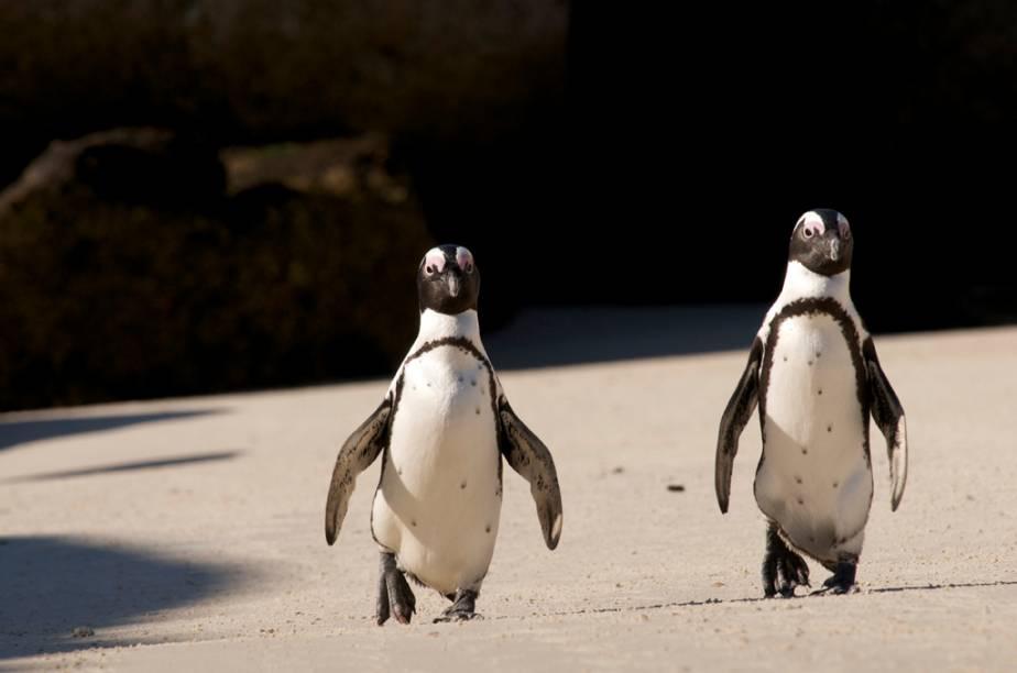 Nos arredores da Cidade do Cabo, Boulders Beach é uma praia habitada por cerca de 3 mil pinguins
