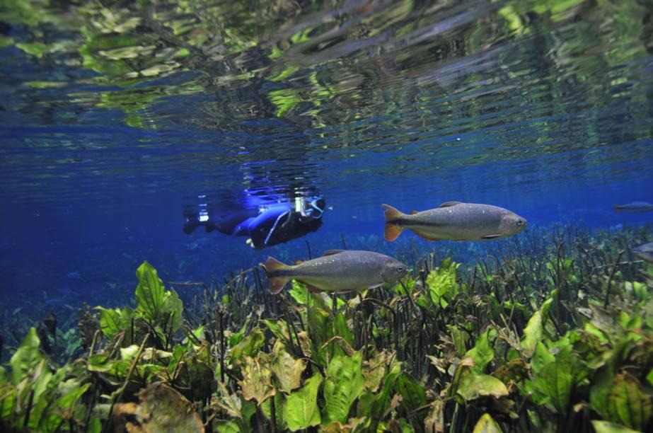 """No <a href=""""http://www.aquarionatural.com.br/"""" target=""""_blank"""" rel=""""noopener""""><strong>Aquário Natural</strong></a>, o visitante recebe treinamento de flutuação numa piscina natural antes de cair no Rio"""