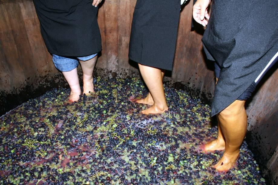 Pessoas pisoteando uva numa mastela, vasília de madeira, na vinícola Luiz Valduga & Filho, no Vale dos Vinhedos