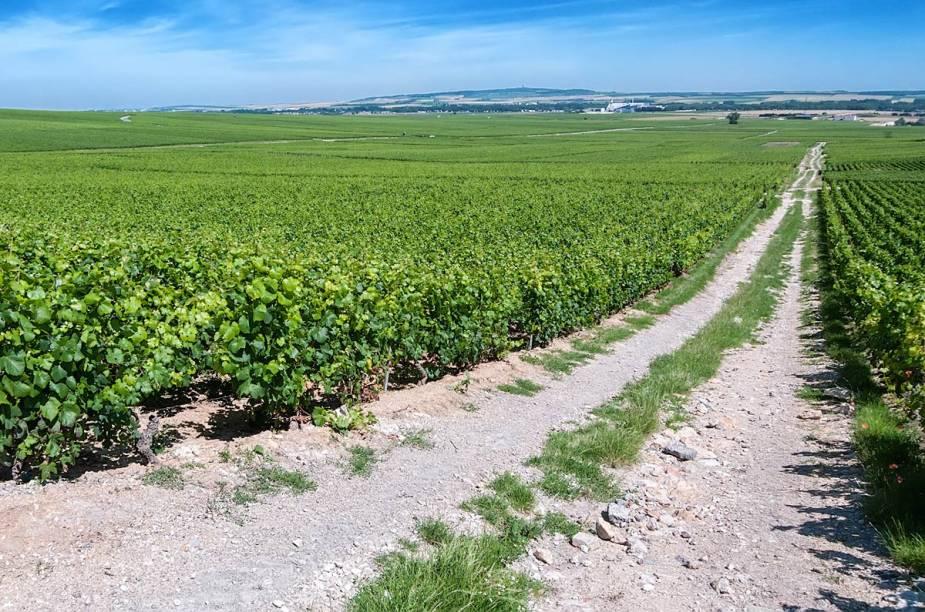 """<a href=""""http://butterfield.com.br"""" rel=""""BUTTERFIELD & ROBINSON"""" target=""""_blank""""><strong>BUTTERFIELD & ROBINSON </strong></a>(11/3071-4590)    <strong>O QUE ELA FAZ POR VOCÊ:</strong> opera na <strong>Alsácia</strong> e em <strong>Champagne</strong> desde a década de 1980.    <strong>PACOTE:</strong> O tour de bike ao mundo dos vinhos franceses vai de <strong>Estrasburgo</strong> a <a href=""""http://viajeaqui.abril.com.br/cidades/franca-reims"""" rel=""""Reims"""" target=""""_blank""""><strong>Reims</strong></a>em cinco noites de hospedagem luxuosa. Na estrada, acompanham-se as produções de vinhas numa média de 40 quilômetros de pedalada por dia. As duas primeiras noites são numa cidadezinha quase na fronteira alemã, onde tem jantar no <a href=""""http://www.auberge-de-l-ill.com"""" rel=""""Auberge de I'ill"""" target=""""_blank""""><strong>Auberge de I'ill</strong></a>, três-estrelas Michelin. O terceiro dia tem piquenique nos vinhedos e noite em outro povoado francês. Já em <strong>Champagne</strong>, local das duas últimas noites, a estrela é a <a href=""""http://moet.com"""" rel=""""Moët & Chandon """" target=""""_blank""""><strong>Moët & Chandon</strong></a><strong> (foto)</strong>. Desde US$ 5 995, sem aéreo."""
