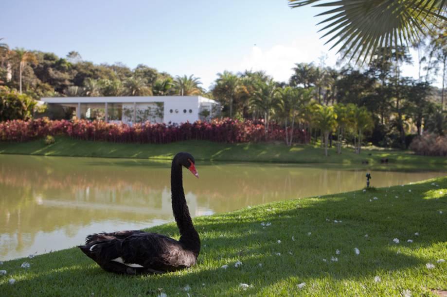 O Instituto Inhotim, em Brumadinho, reúne a maior coleção da arte contemporânea do país em um dos mais ricos jardins botânicos