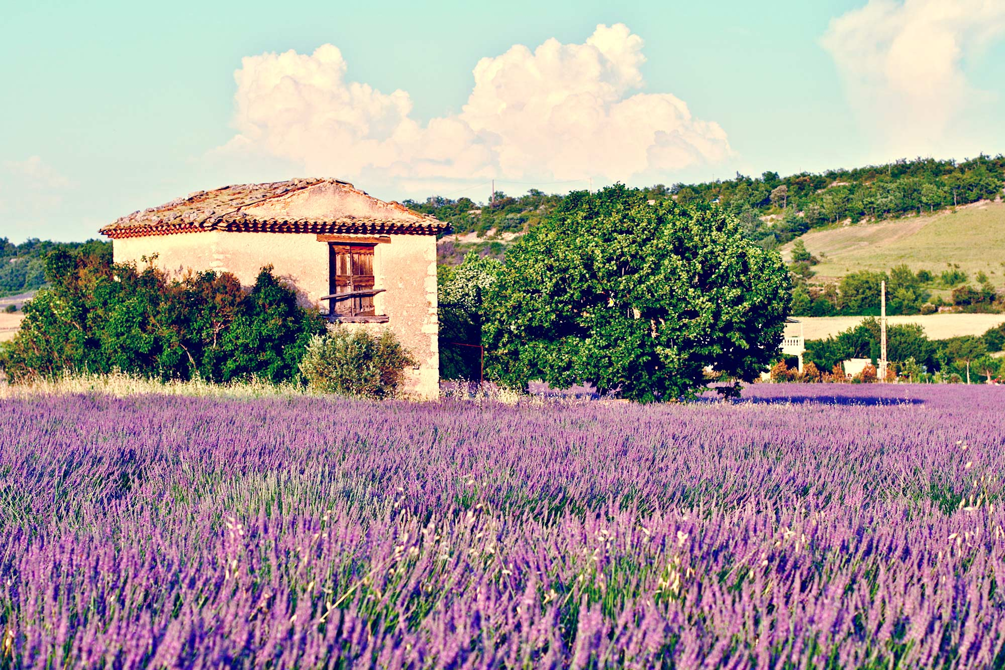 Provence - França