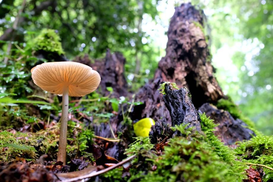 Durante as caminhadas, fique atento a detalhes, como as flores silvestres e cogumelos, que rendem ótimos cliques