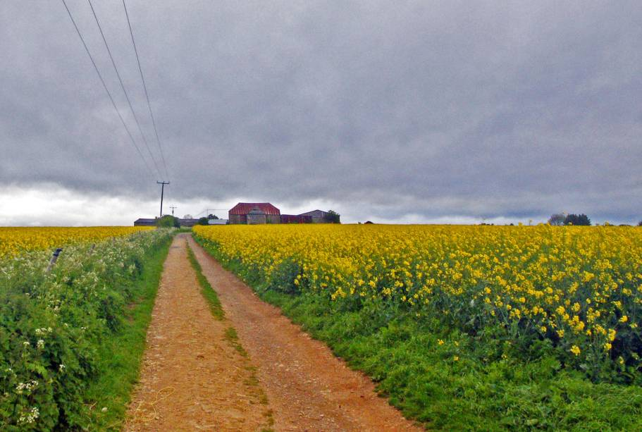 Os campos de canola estão em muitos lugares e são uma marca de Cotswolds