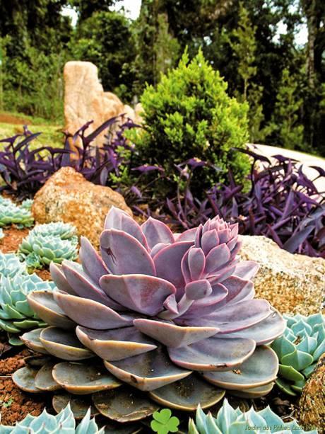 O Jardim dos Pinhais tem oito projetos ornamentais com espécies botânicas de diversos países. O ingresso dá direito a um tour guiado
