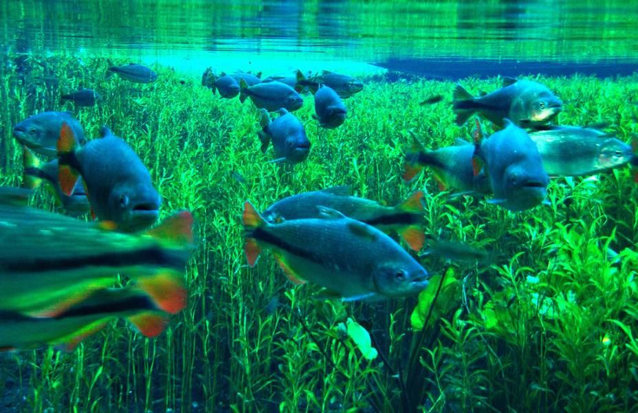 Com rios e lagoas cristalinas, <strong>Bonito</strong> é o maior playground do ecoturismo brasileiro