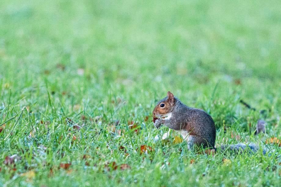 E um dos mais fáceis: os esquilos