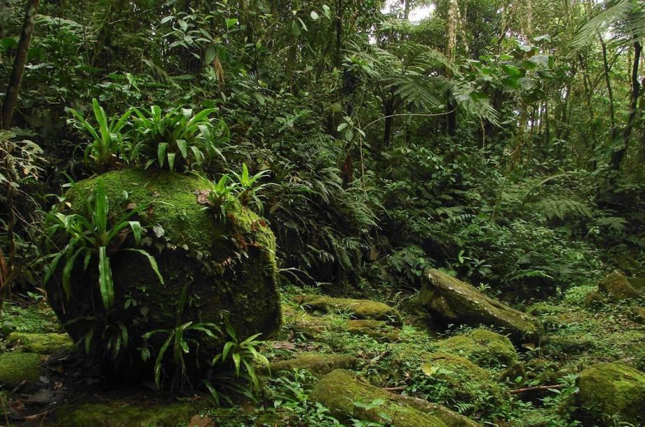 """A Trilha do Ouro é o mais famoso atrativo do Parque Nacional da Serra da Bocaina, com trechos de piso pé-de-moleque, cachoeiras e contato direto com a Mata Atlântica.Para os menos aventureiros, há trilhas menores e boas pousadas para descansar.<a href=""""https://www.booking.com/searchresults.pt-br.html?aid=332455&sid=605c56653290b80351df808102ac423d&sb=1&src=index&src_elem=sb&error_url=https%3A%2F%2Fwww.booking.com%2Findex.pt-br.html%3Faid%3D332455%3Bsid%3D605c56653290b80351df808102ac423d%3Bsb_price_type%3Dtotal%26%3B&ss=S%C3%A3o+Jos%C3%A9+do+Barreiro%2C+Estado+de+S%C3%A3o+Paulo%2C+Brasil&checkin_monthday=&checkin_month=&checkin_year=&checkout_monthday=&checkout_month=&checkout_year=&no_rooms=1&group_adults=2&group_children=0&b_h4u_keep_filters=&from_sf=1&ss_raw=S%C3%A3o+Jos%C3%A9+do+Barreiro&ac_position=0&ac_langcode=xb&dest_id=-671358&dest_type=city&place_id_lat=-22.64524&place_id_lon=-44.58052&search_pageview_id=98247b5026cd02d3&search_selected=true&search_pageview_id=98247b5026cd02d3&ac_suggestion_list_length=2&ac_suggestion_theme_list_length=0"""" target=""""_blank"""" rel=""""noopener""""><em>Busque hospedagens em São Jose do Barreiro</em></a>"""