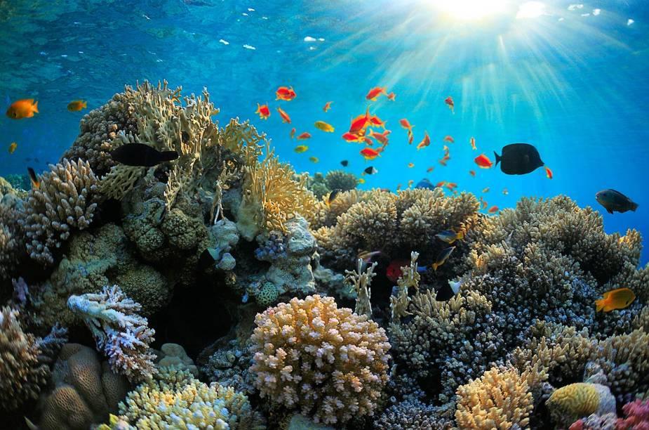 """<a href=""""http://viajeaqui.abril.com.br/estabelecimentos/australia-cairns-atracao-grande-barreira-de-coral"""" rel=""""Grande Barreira de Corais (Austrália)"""" target=""""_blank""""><strong>Grande Barreira de Corais (Austrália)</strong></a>                                        Os viajantes podem explorar a área tanto fazendo snorkel (prática na qual se usa apenas uma máscara de mergulho e se permanece na superfície do oceano) como mergulhando em águas profundas. Nos dois casos, é possível ver toda a beleza da Grande Barreira. Um dos melhores pontos de partida para os tours de barco que levam os turistas até os corais é a ilha Hamilton Island, dona de lindas praias onde os forasteiros podem relaxar após o passeio."""
