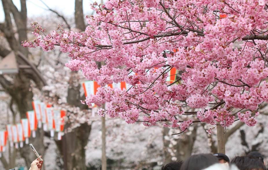 Na primavera o parque é tomado por turistas e locais para apreciarem as cerejeiras