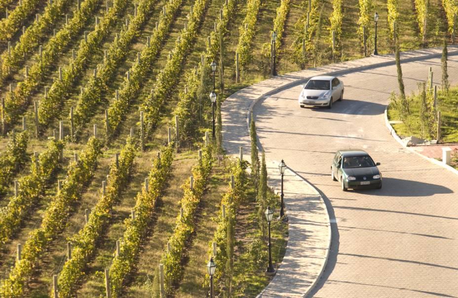 Vinhedo na área onde está instalado o Spa do Vinho, no Vale dos Vinhedos, em Bento Gonçalves (RS)
