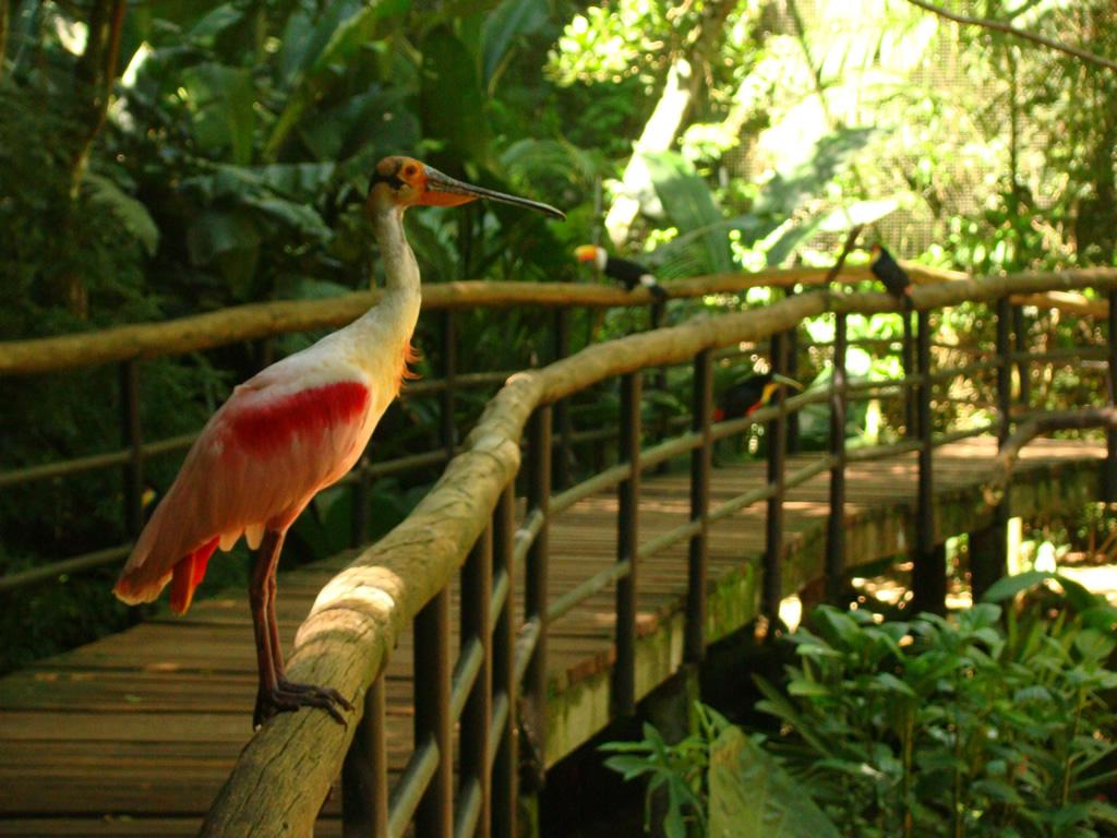 No Parque das Aves, é possível conhecer os viveiros por dentro e ver de perto mais de 900 espécies de aves