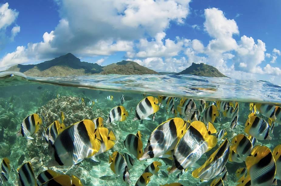 """<a href=""""http://viajeaqui.abril.com.br/paises/polinesia-francesa"""" rel=""""Polinésia Francesa"""" target=""""_blank""""><strong>Polinésia Francesa</strong></a>                                        A Polinésia é formada por 118 ilhas e atóis, espalhados em uma zona com 2,5 milhões de quilômetros quadrados – quase um terço do território brasileiro. Grande parte destas porções de terra abrigam lindas montanhas e o mar ganha seu aspecto cristalino após atravessar as extensas faixas de corais que cercam o arquipélago. Entre os lugares imperdíveis da região destacam-se as ilhas de Bora Bora, Moorea e Huahine, todas facilmente acessíveis por avião a partir do Taiti, a porta de entrada da Polinésia Francesa."""