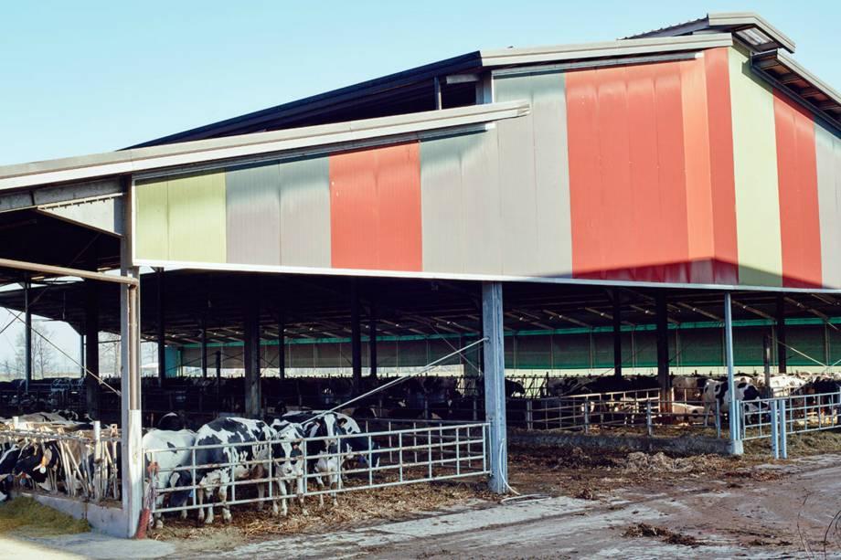 Cem toneladas de excremento são produzidas por ano pelas mais de 2.500 vacas mantidas pelo fazendeiro