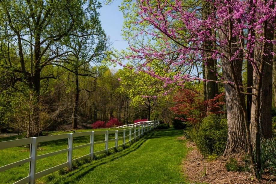 A primavera nos Estados Unidos é cheia de cores