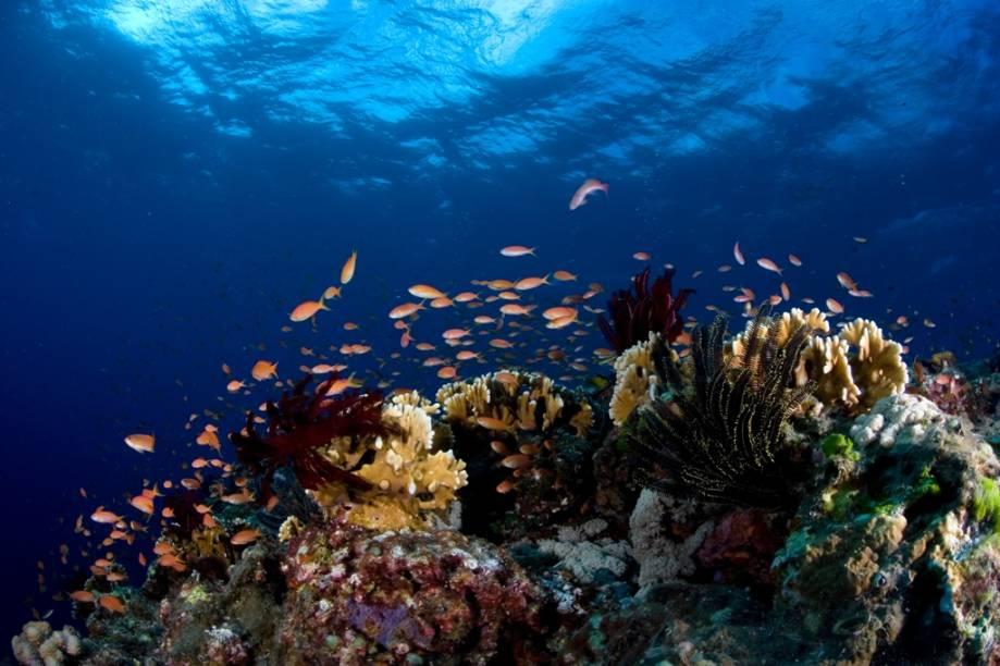 Okinawa é um dos melhores pontos de mergulho do Japão, tanto por sua excelente visibilidade como por sua grande biodiversidade