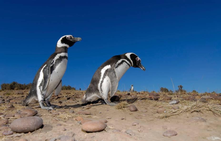 A Isla Martillo é o hábitat de mais de seis mil pinguins de Magalhães entre outubro e abril. No passeio de catamarã ou em caminhadas, é possível ver os animais de perto