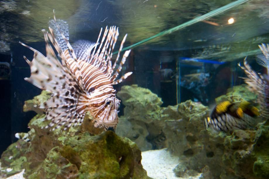 Neste aquário, o visitante é convidado a encontrar o peixe venenoso. Há uma anêmona e um peixe palhaço, que embora se alimentem de outros peixes, convivem pacificamente