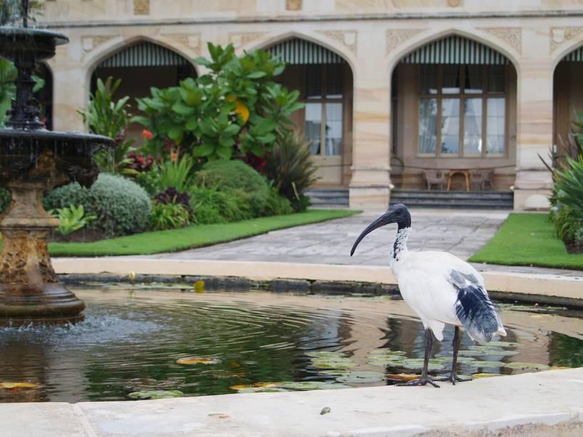 Ibis bebe na fonte do Royal Botanic Garden, em Sydney, Austrália; no Réveillon 2015, o parque oferece um jantar com DJ