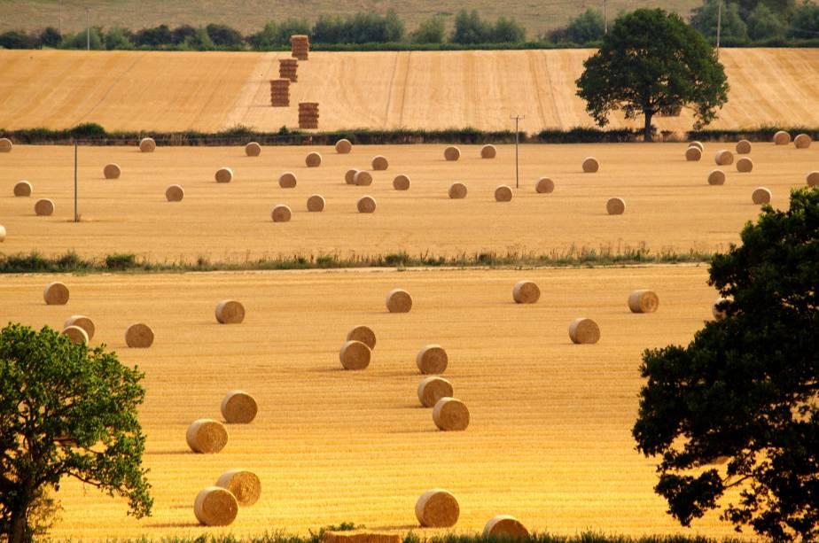 Na época das colheitas muitas regiões de Cotswolds ficam com esse aspecto seco, mas intensamente fotogênico