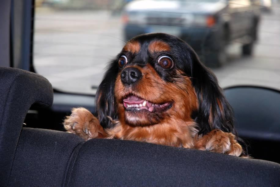 Limitesde bagagem e restrições ao transporte bichos, entre outras normas do motorista (como proibição ou não de fumar), são mencionadas no perfil, e, quando omitidas, devem ser elucidadas pelo chat.