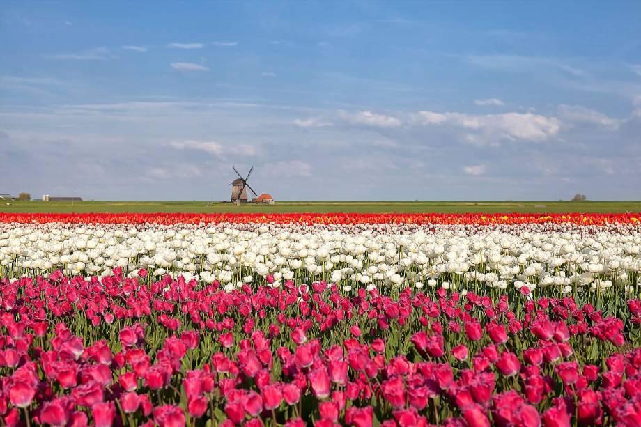 Lisse, fica a cerca de 30 quilômetros de Amsterdã