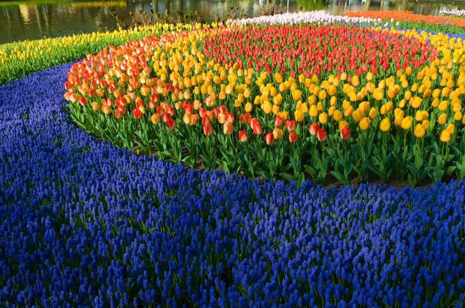 Outras milhares de flores além das tulipas também são encontradas em Keukenhof