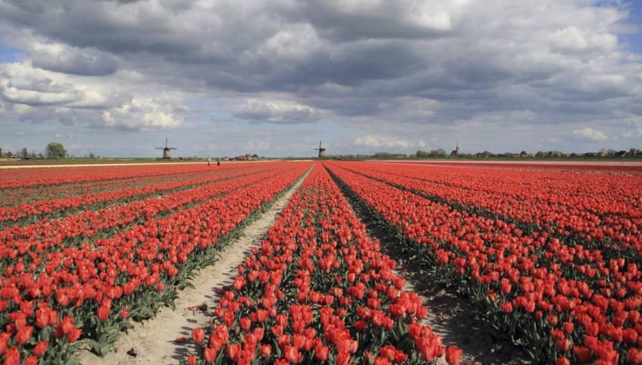 O parque botânico Keukenhof expões uma das paixões dos holandeses, as tulipas