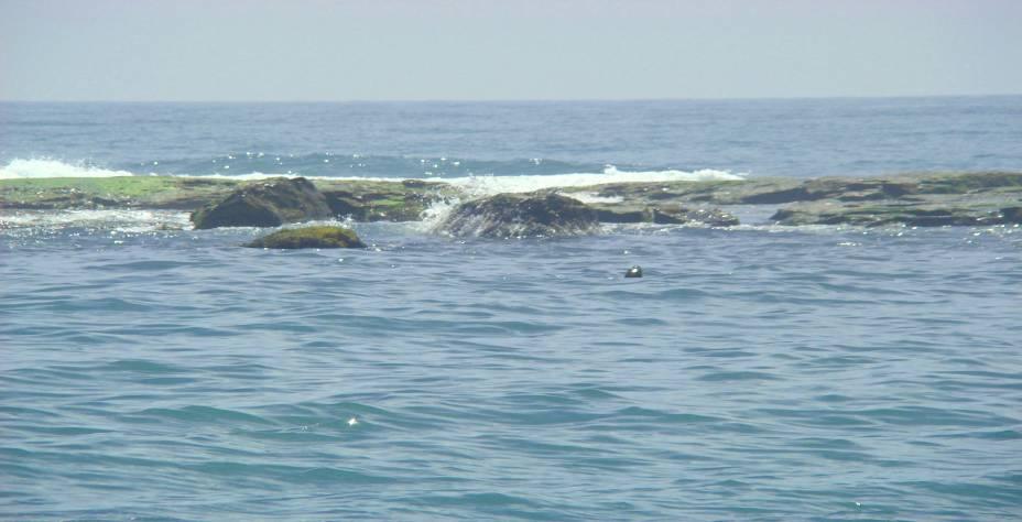 Partindo de Torres, a Ilha dos Lobos pede por um passeio de barco entre casais e famílias. O motivo: a visão de belos animais marinhos, que adoram aparecer para os visitantes