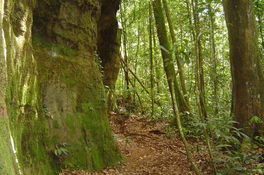 Na trilha para a Cachoeira da Iracema, é possível avistar pitorescas rochas